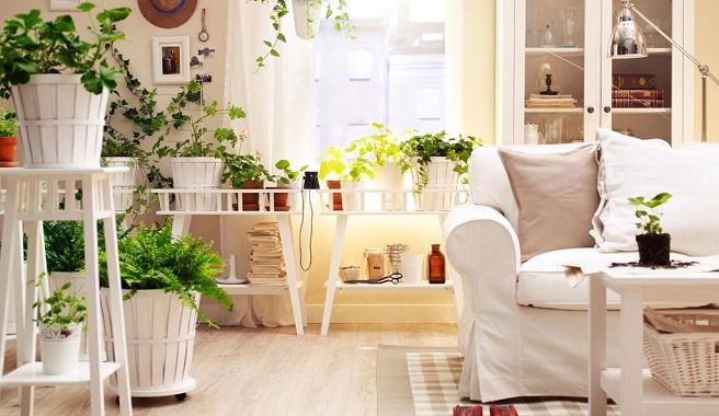 mejores plantas decorativas de interior Las 16 Mejores Plantas De Interior Para Tu Casa Decoraplant