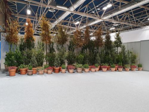 Composición con planta natural COP 25 Cumbre del Clima