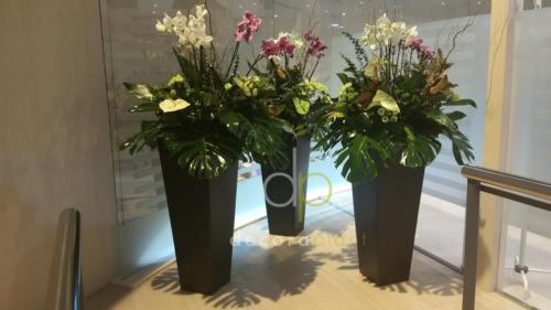 Composición orquídeas y flor tropical en maceta alta