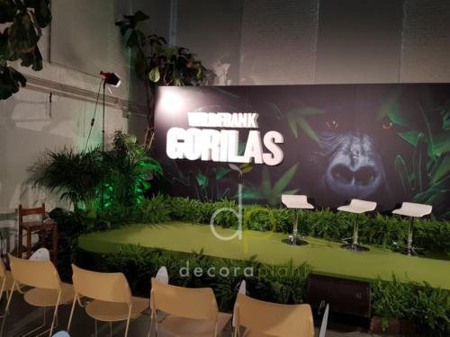 Presentación Wild Frank Gorilas